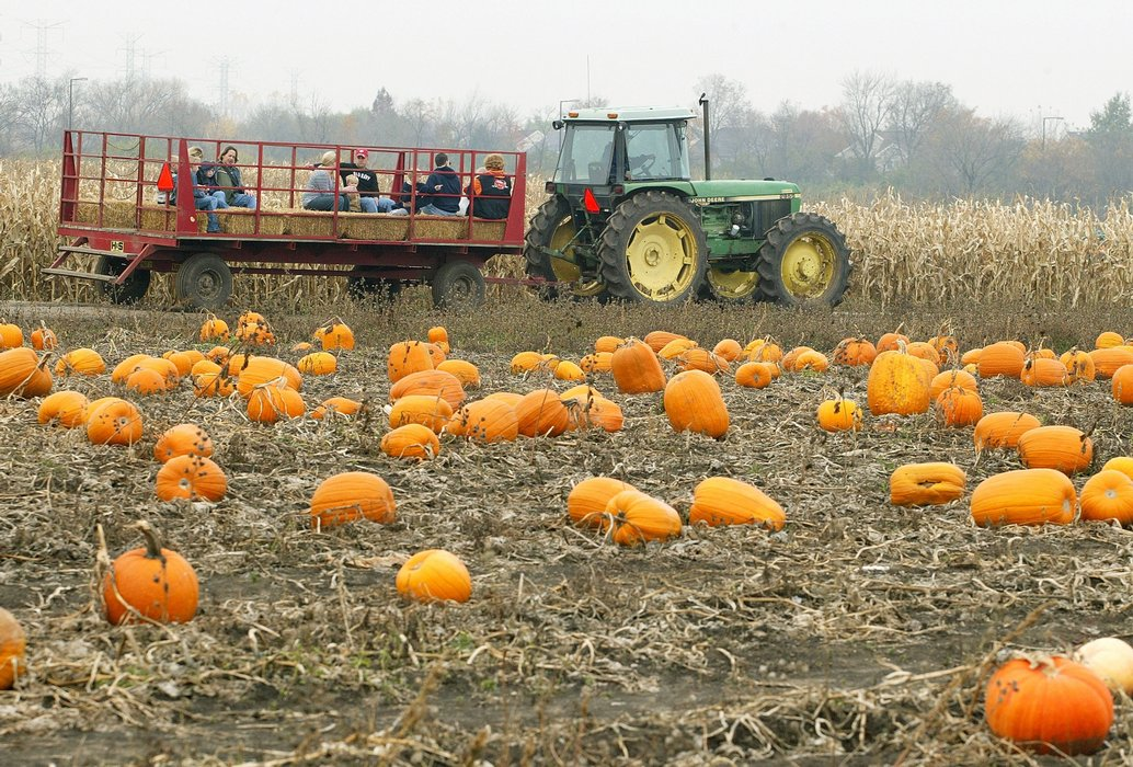 Picture: Portland Pumpkin Patches